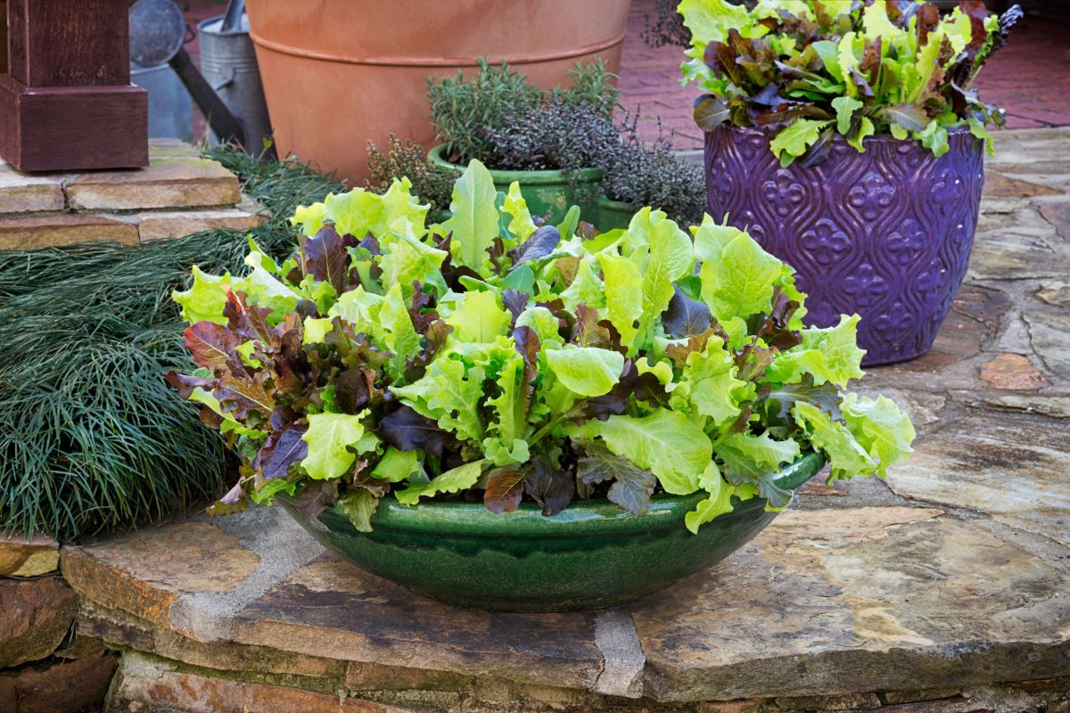 GardenSMART Featured Article